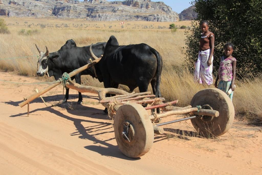 Ochsenkarren Madagaskar. Bis heute ist Madagaskars Infrastruktur nur stellenweise gut ausgebaut.