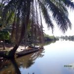 Einbaum Pangalanes Kanal Madagaskar Palme. PRIORI Reisen.