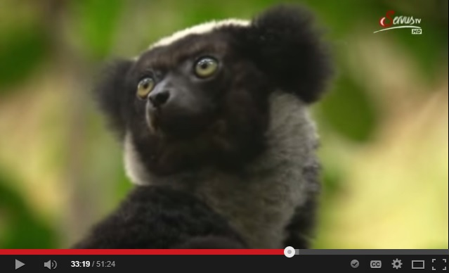 Madagaskar Natur Film PRIORI Reisen