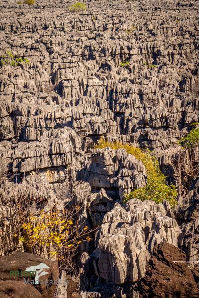 Madagaskar Tsingy Ankarana Nationalpark PRIORI Reisen