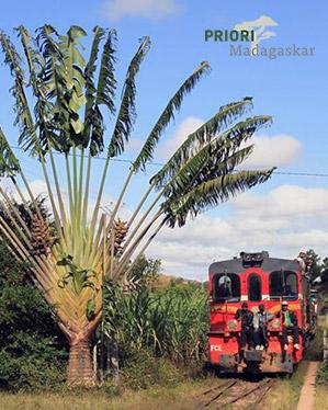 Ravenala Baum des Reisenden Madagaskar PRIORI Eisenbahn