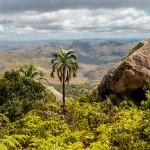 Andringitra-Nationalpark-Madagaskar-Blick-Palme