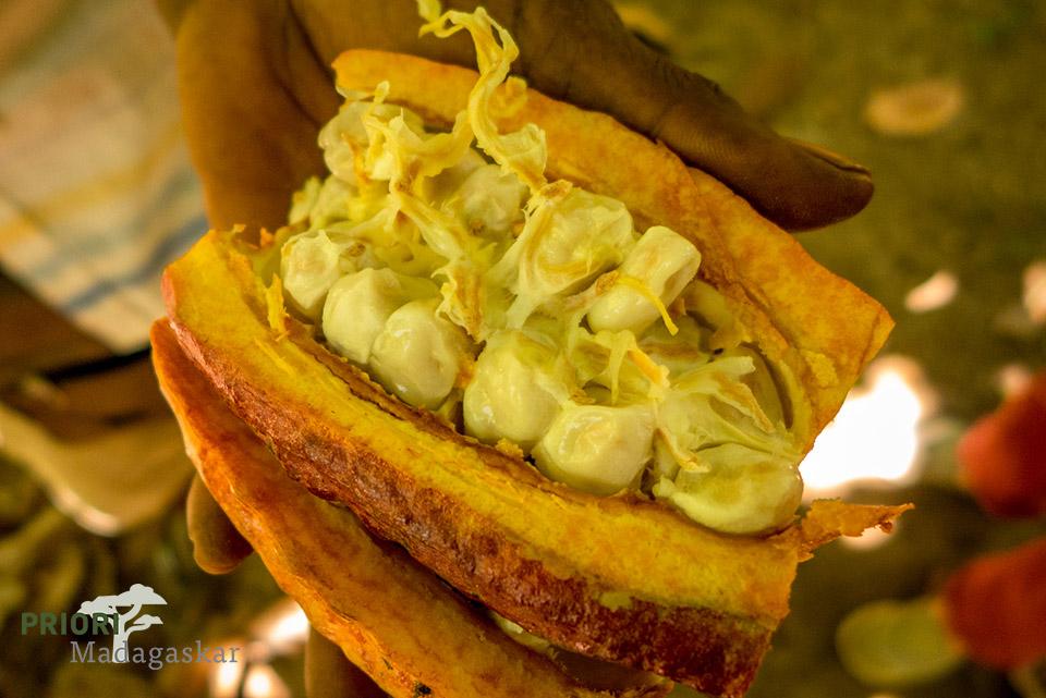 Kakaobohnen nach der Ernte in Madagaskars Norden.