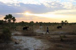 Madagaskar-katsepy