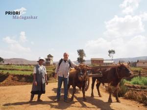 Zebu-Madagaskar_PRIORI-Reisen_ZOB