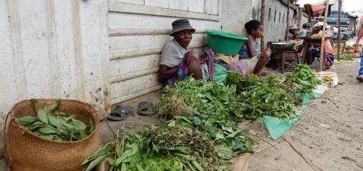 Heilpflanzen Madagaskar Antalaha PRIORI Reisen