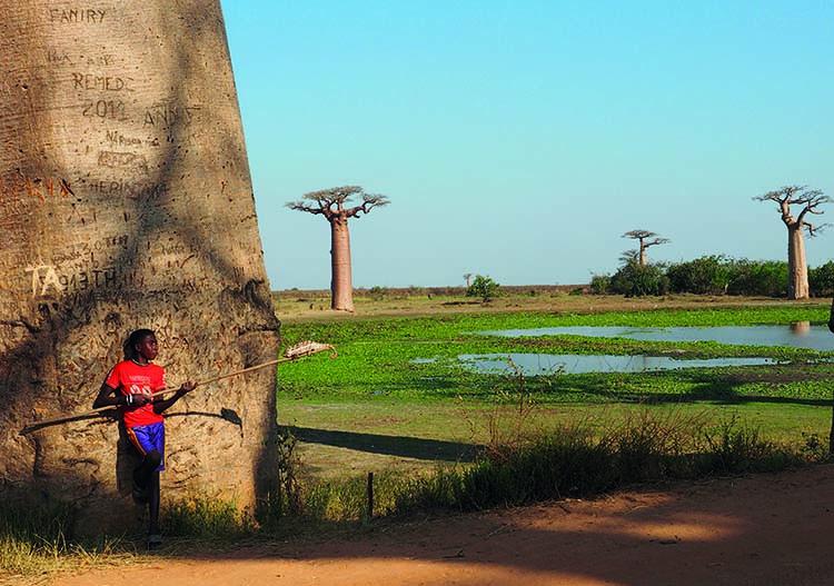 Baobaballee Morondava