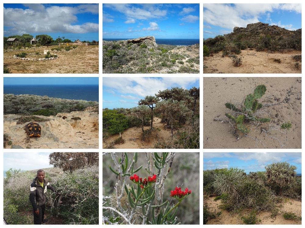 NP Cap Sainte Marie Madagaskar