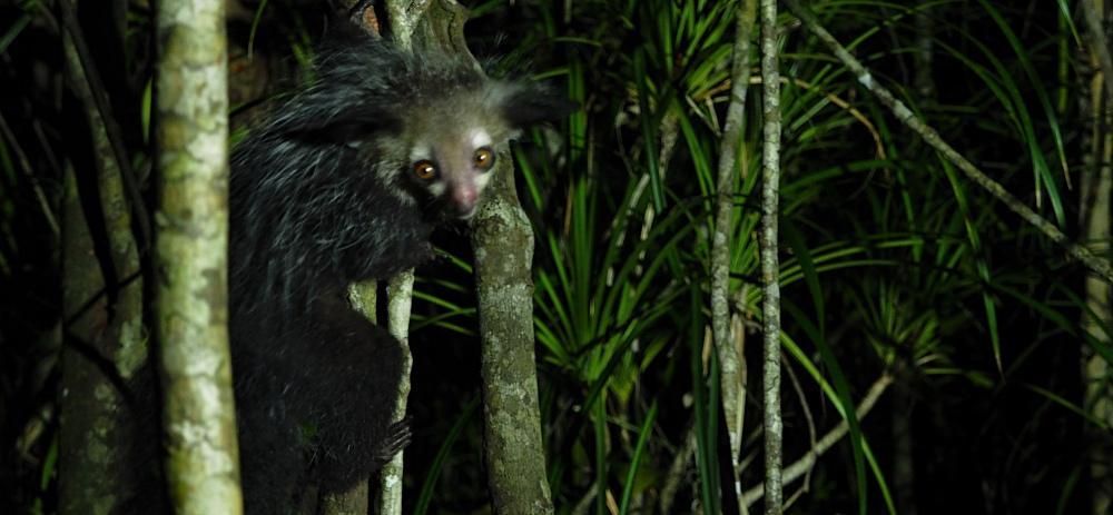 Madagaskar Nachtwanderung