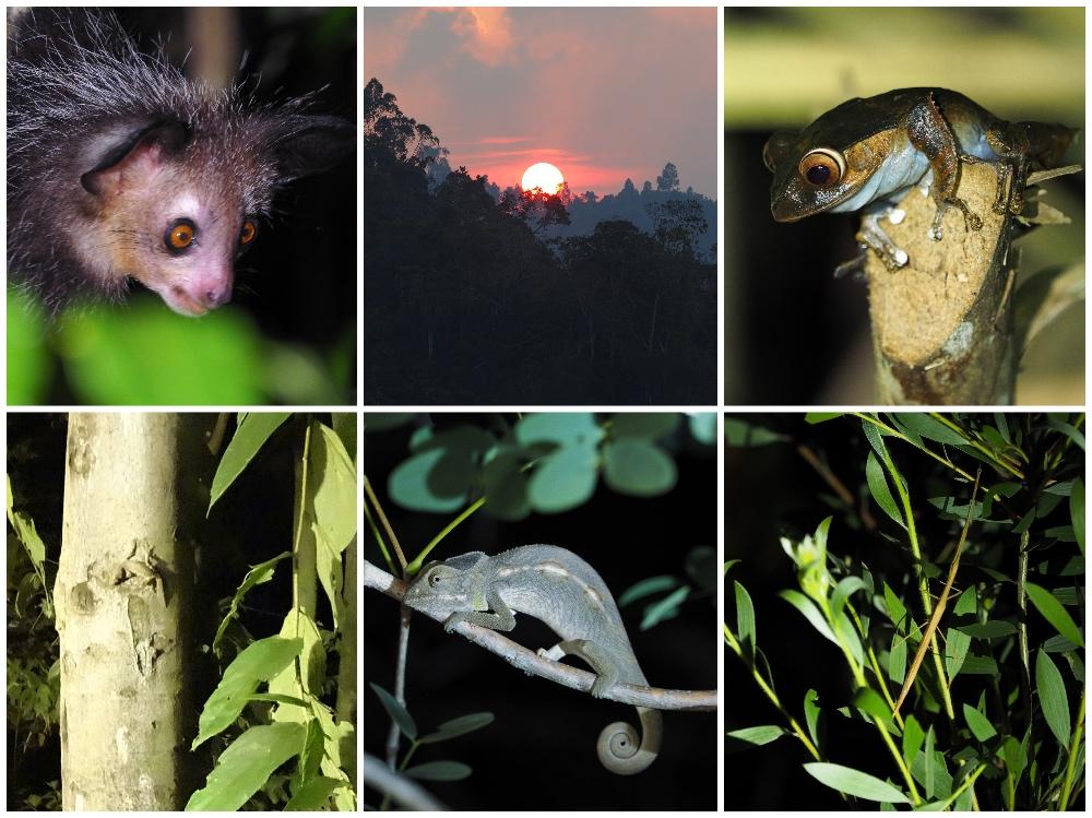 Nachtwanderung in Madagaskar