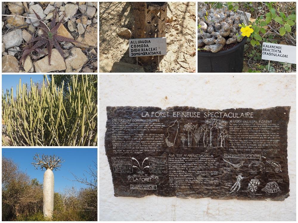 Flora Arboretum d'Antsokay