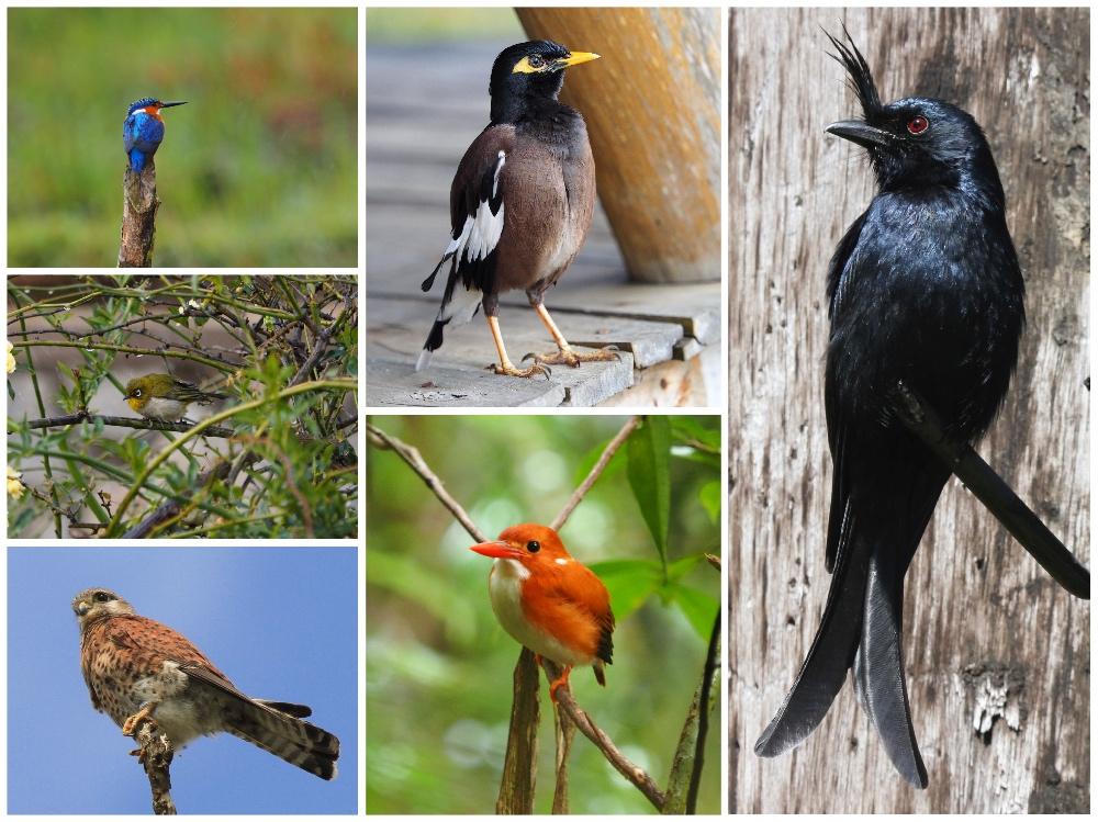 Verschiedene Vogelarten in Madagaskar
