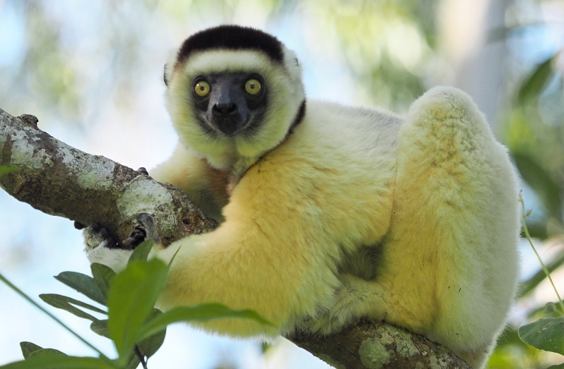 Reservat Nahampoana Madagaskar