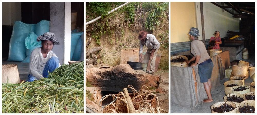 Madagaskar Verarbeitung von Vanille