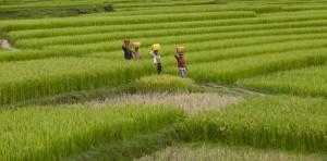 Reisfelder Madagaskar_Martin Glauser_Fotoreise 2014