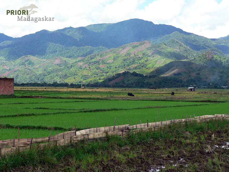 Ebene mit Reisfeldern in SAVA